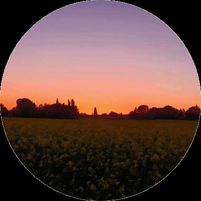 Recklinghausen Feld
